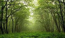 नयाँ ऐनमा साझेदारी वनको व्यवस्था